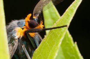 motheye