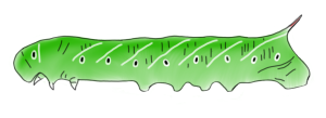 CaterpillarDrawing