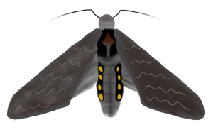 Adult Moth (Drawing by Marianne Alleyne)